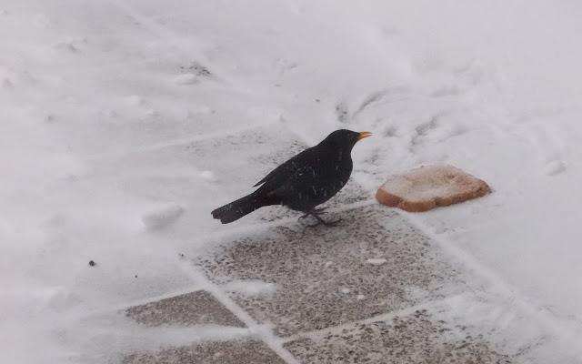 Vogel eet een stuk brood in de sneeuw