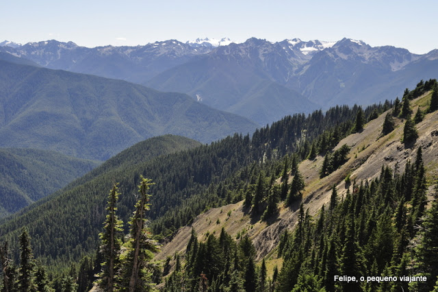 hurricane_ridge_olympic_national_park