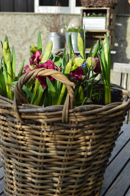 Ideer til flerfarget blomstring i vårkrukker - Krukker med forskjellige vårblomster - Tulipaner, narsisser og perleblomster i krukke