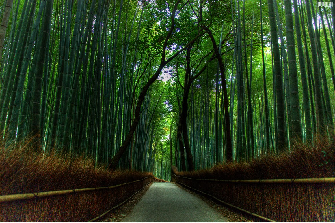 The most beautiful bamboo forest in japan beautiful - Most beautiful dark wallpapers ...