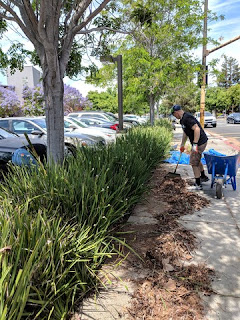 Weeding, raking, and sweeping debris, San Jose California