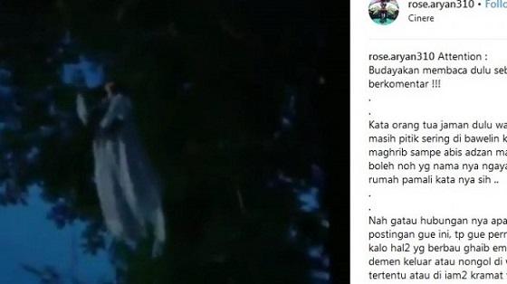 Video Penampakan Kuntilanak di Pohon Ini Gegerkan Sosmed