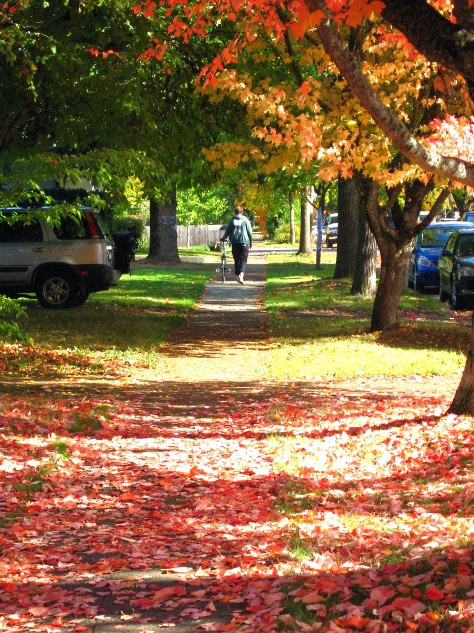 Bridgestone CB-Zip, fall color, Eugene Oregon, B-Stone CB-Zero, trees, red, gold