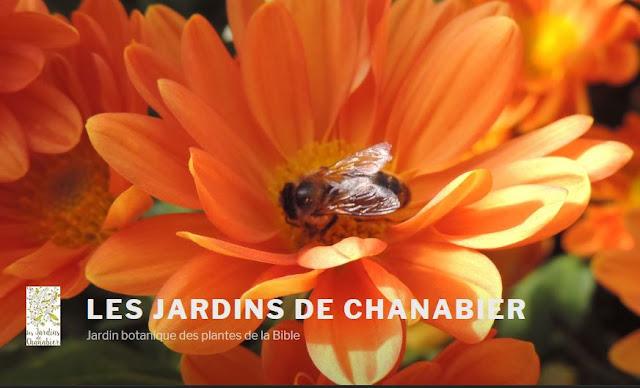 http://www.jardinsdechanabier.com/