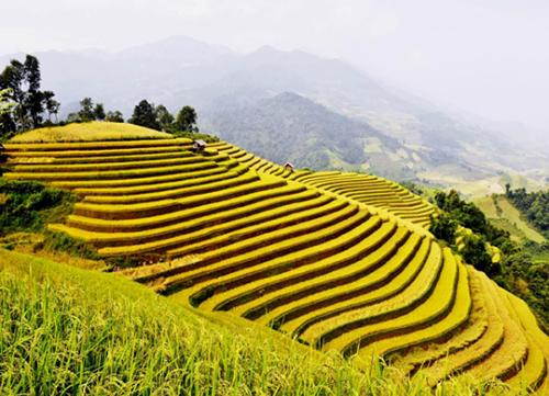 Trải nghiệm 3 cung đường ngắm mùa lúa vàng ở miền núi phía Bắc-5