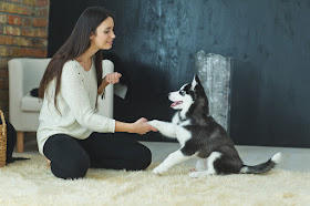 Positive reinforcement - used here to teach a Siberian husky puppy to shake paw - is a better choice than negative reinforcement in dog training
