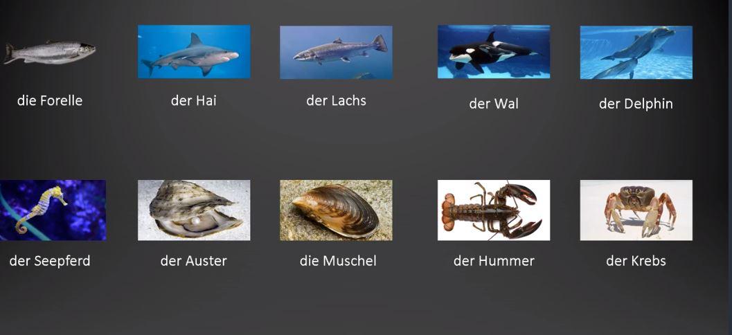 der fisch balık,  die forelle alabalık  der hai köpekbalığı   der lachs somon   der wal balina  der delphin yunus