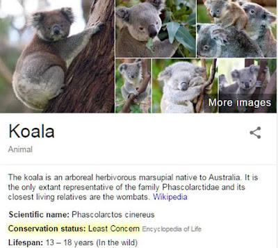 google-koala