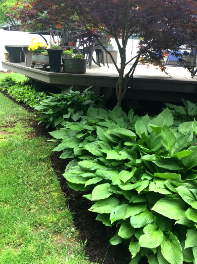 How to Spruce up the Yard with Edging and Mulch