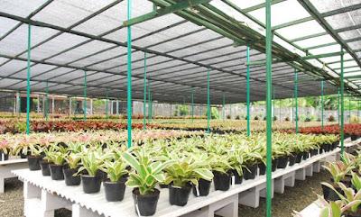 Jasa Tukang Taman Surabaya Tanaman hias bromelia