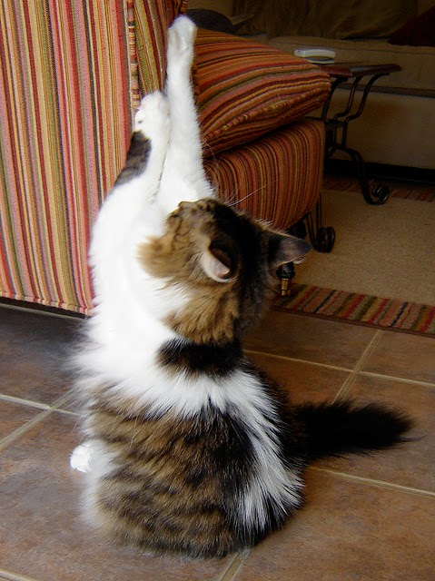 Top 10 Tips - How to Stop Your Cat Scratching the ...
