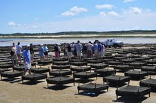 Mass Oyster Restoration Group Tours Big Rock Oyster Co in Dennis MA