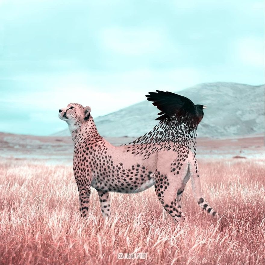 12-Cheetah-Loosing-its-Spots-Julien-Tabet-Animals-and-Architecture-Photoshopped-Surrealism-www-designstack-co