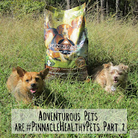 Jada and Bailey next to a bag of Pinnacle Holistic grain free dog food