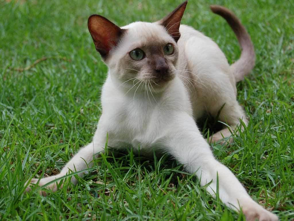 gato - photo #37