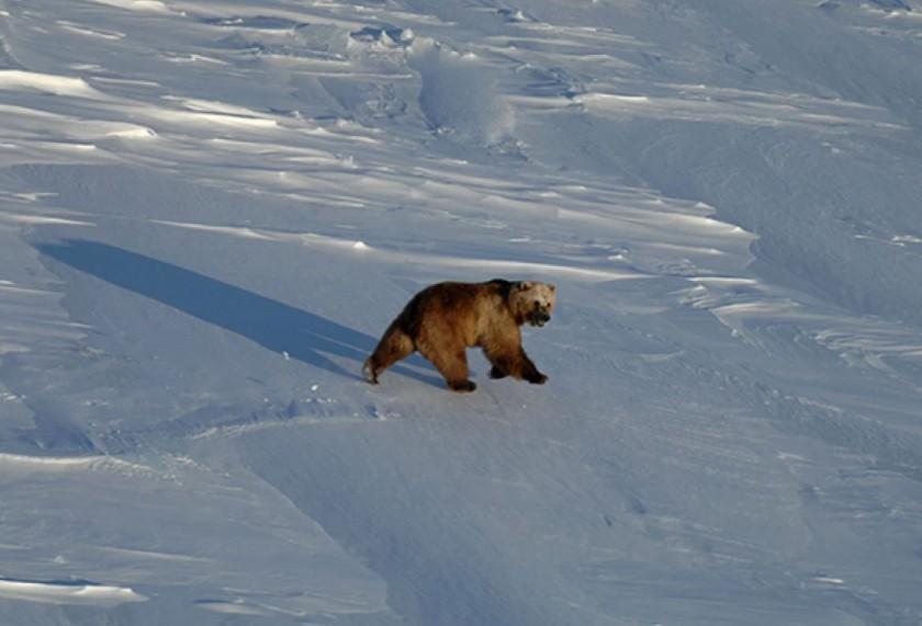 αρκούδες πορνό HD XXX Viseo
