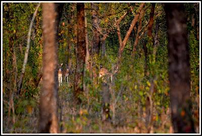 Nijhum Dwip, Deer in Nijhum Island, Nijhum Island Hatia, Trip Navigation Bangladesh, Nijhum Dwip Travel Guide