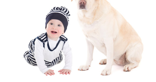 3 Tips for Preparing your Dog for Baby's Arrival