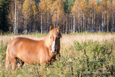 equestrian_photography