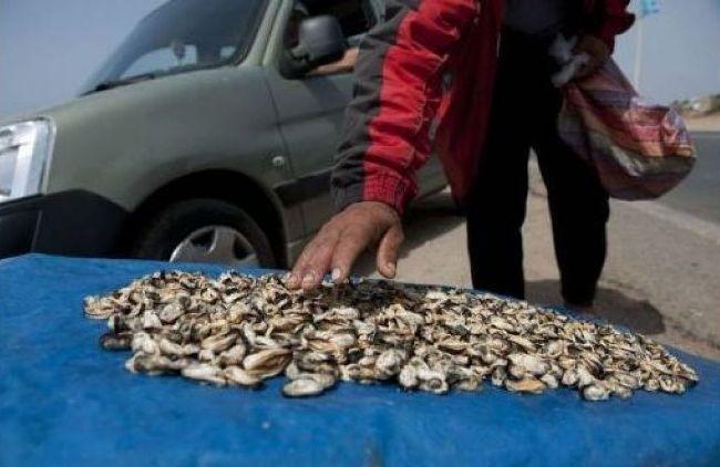 آسفي: منع جمع وتسويق الصدفيات على مستوى منطقة رأس بدوزة بسبب مواد سامة 10 غشت 2017