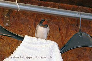 Vogel auf einem Kleiderbügel: Foto von unabhängiger Stampin' Up! Demonstratorin in Coburg