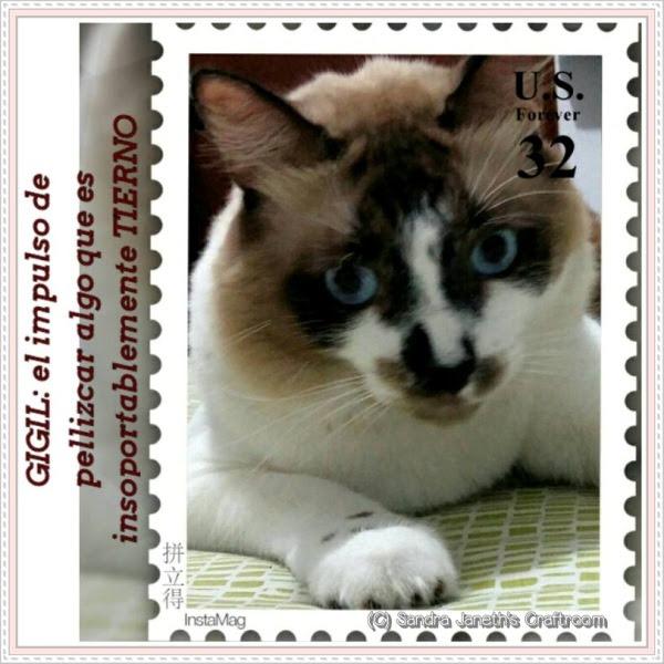 Gatos, Coco. Gigil