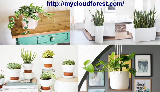 Plants Online Store: Best indoor plants online Bangalore