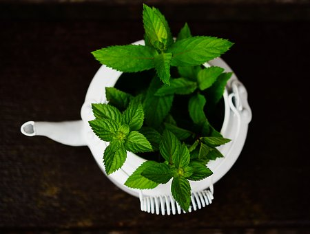 فوائد النعناع  الأخضر على البشرة والصحة