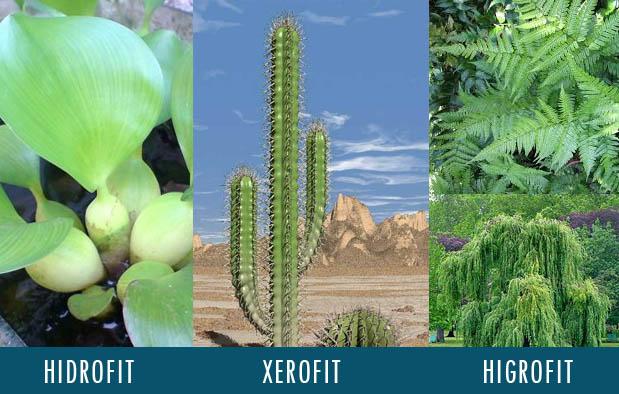 Contoh Tumbuhan Hidrofit, Higrofit, dan Xerofit