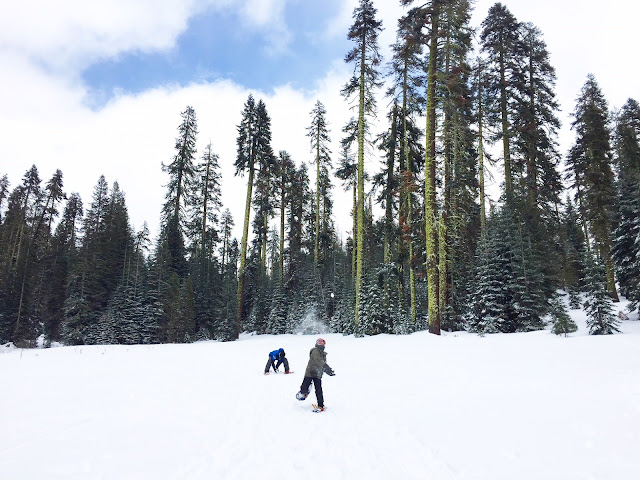 Ziggy-Rocket-Zirocksays-Snowball-Fight-Yosemite