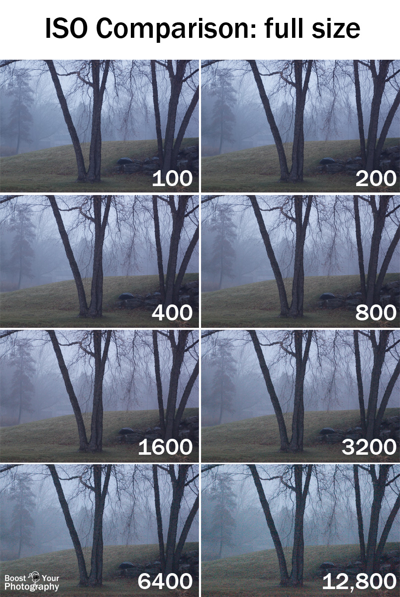 ISO Comparison at Full Size | Boost Your Photography