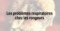 Les problèmes respiratoires chez les rongeurs