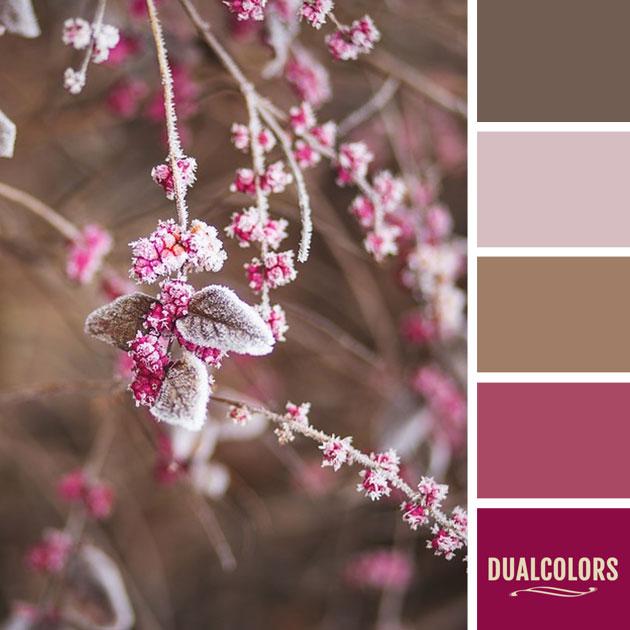 color_paleta_50