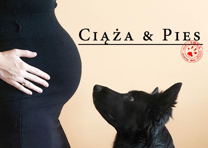 http://www.zonaczarnywilk.pl/2018/01/ciaza-pies.html