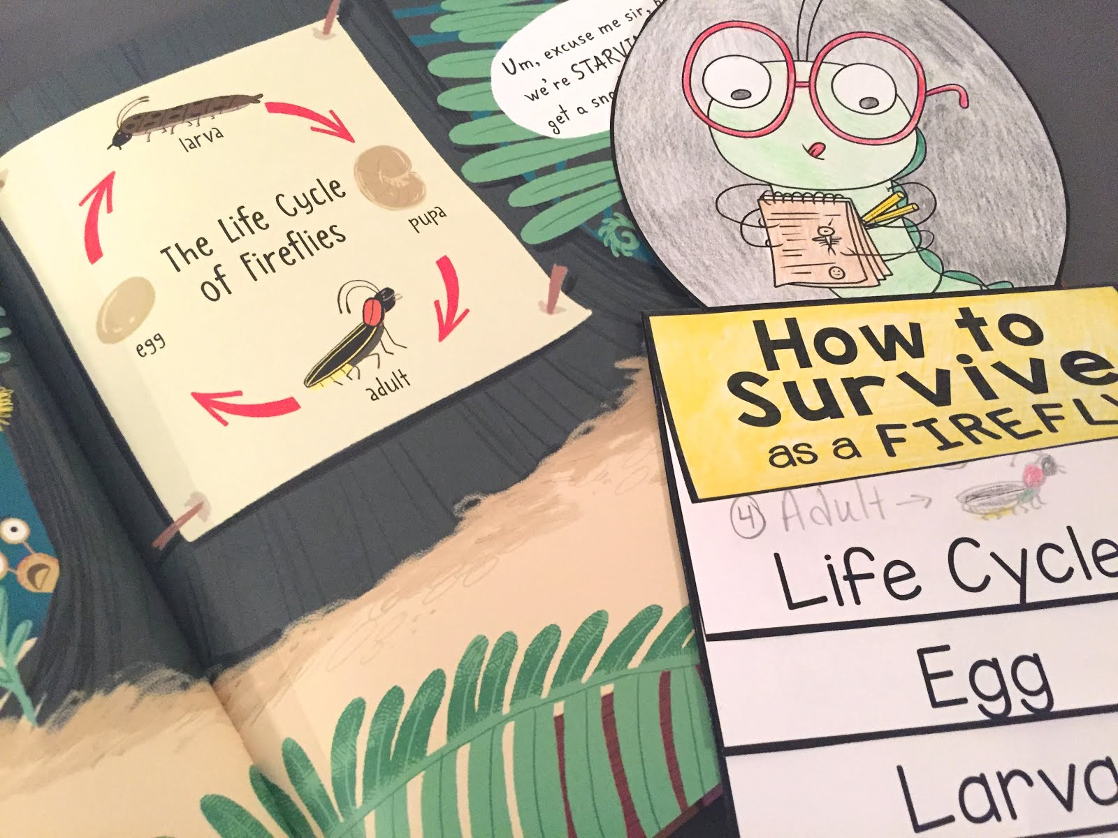 Free How To Survive As A Firefly Life Cycle Flip Book