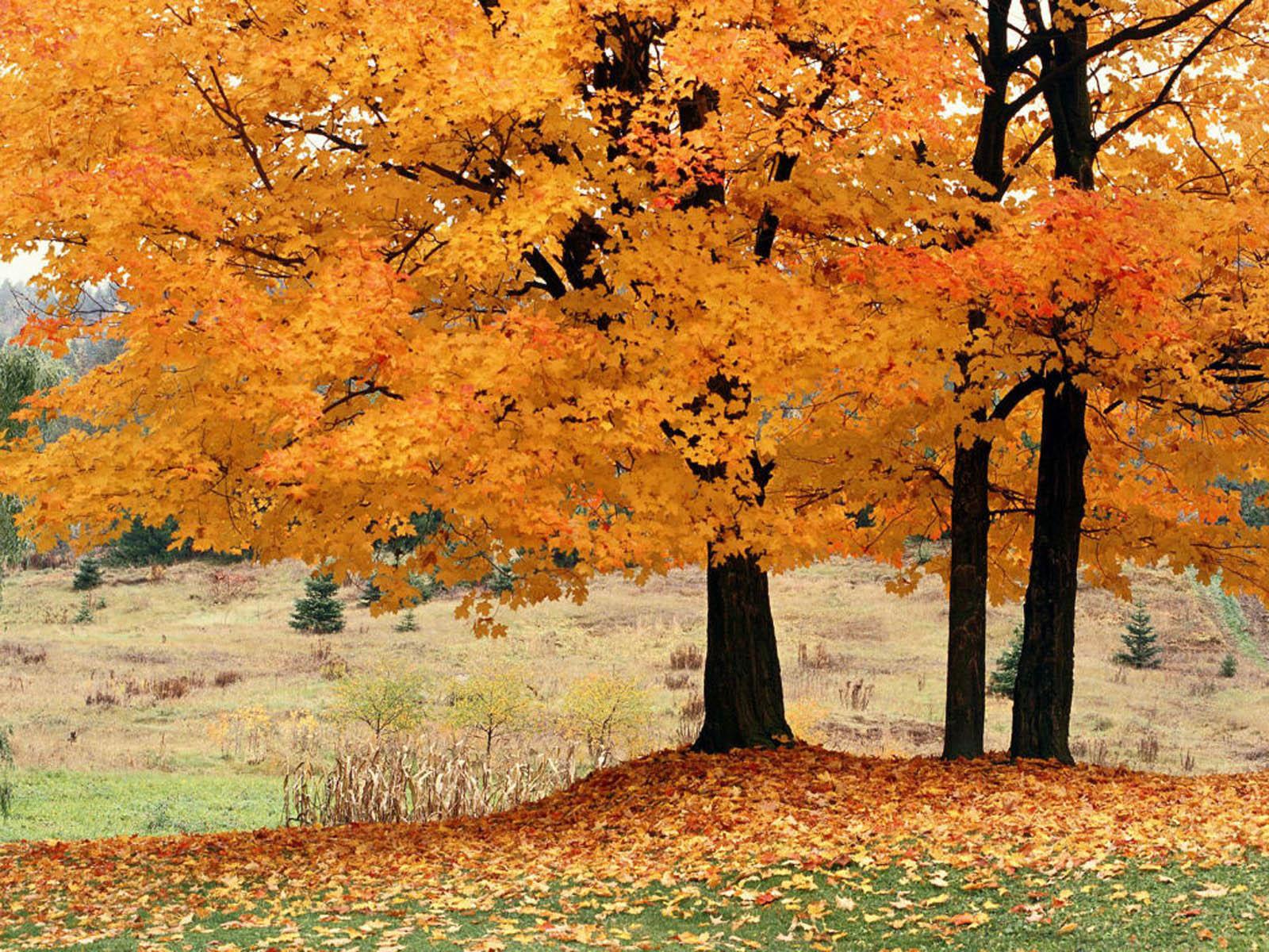 Tom Wood Honda >> wallpapers: Trees Wallpapers