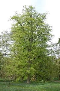 red iberica de bosques comestibles