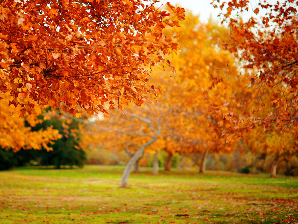 Wallpapers: Nature Wallpapers Free