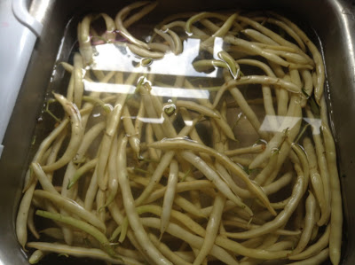 Ceaberry's Homesteading: Yellow Wax Snap Bean