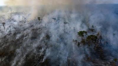 حرائق غابات الامازون,