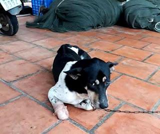 Người phụ nữ chặt chân chó: chú chó đã cắn nhiều người trong xóm