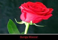 kelopak mawar