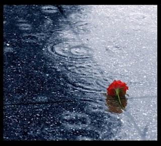 Dumelan saat hujan sore ini