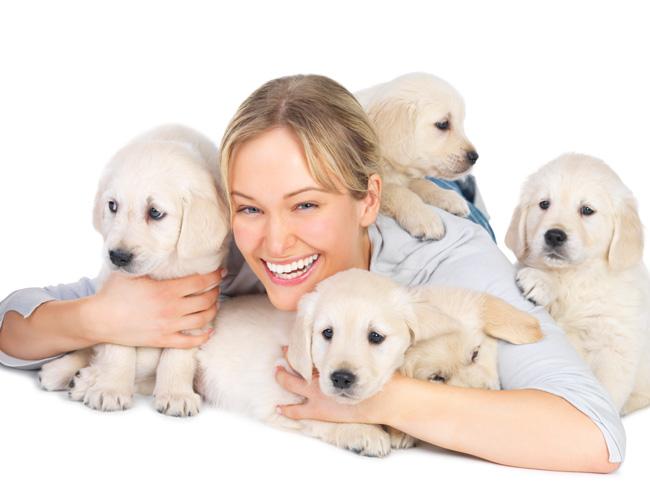 Chcę zostać hodowcą psów