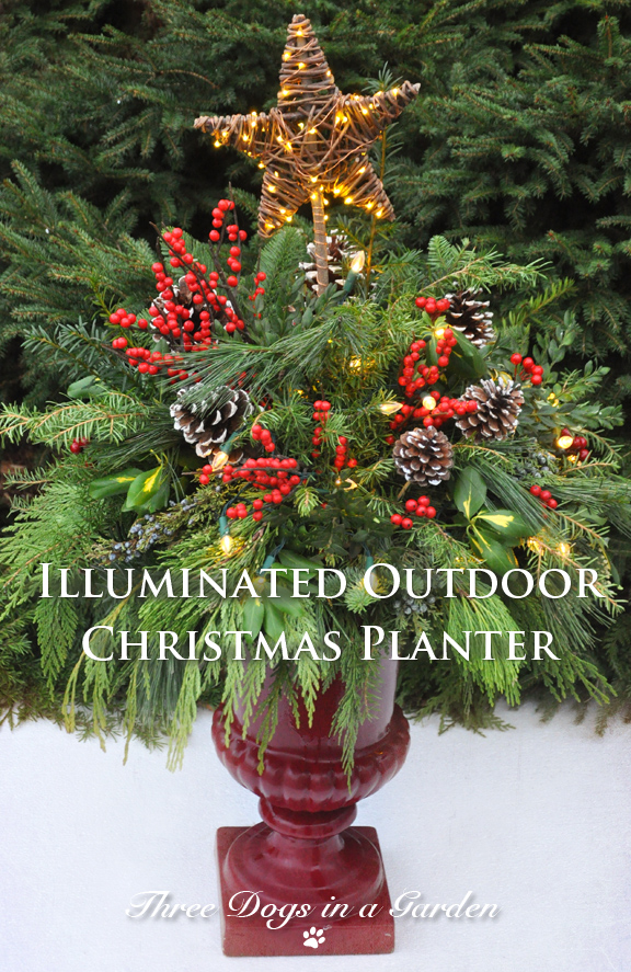 Outdoor Christmas Planters With Lights.Three Dogs In A Garden Illuminated Outdoor Christmas Planter