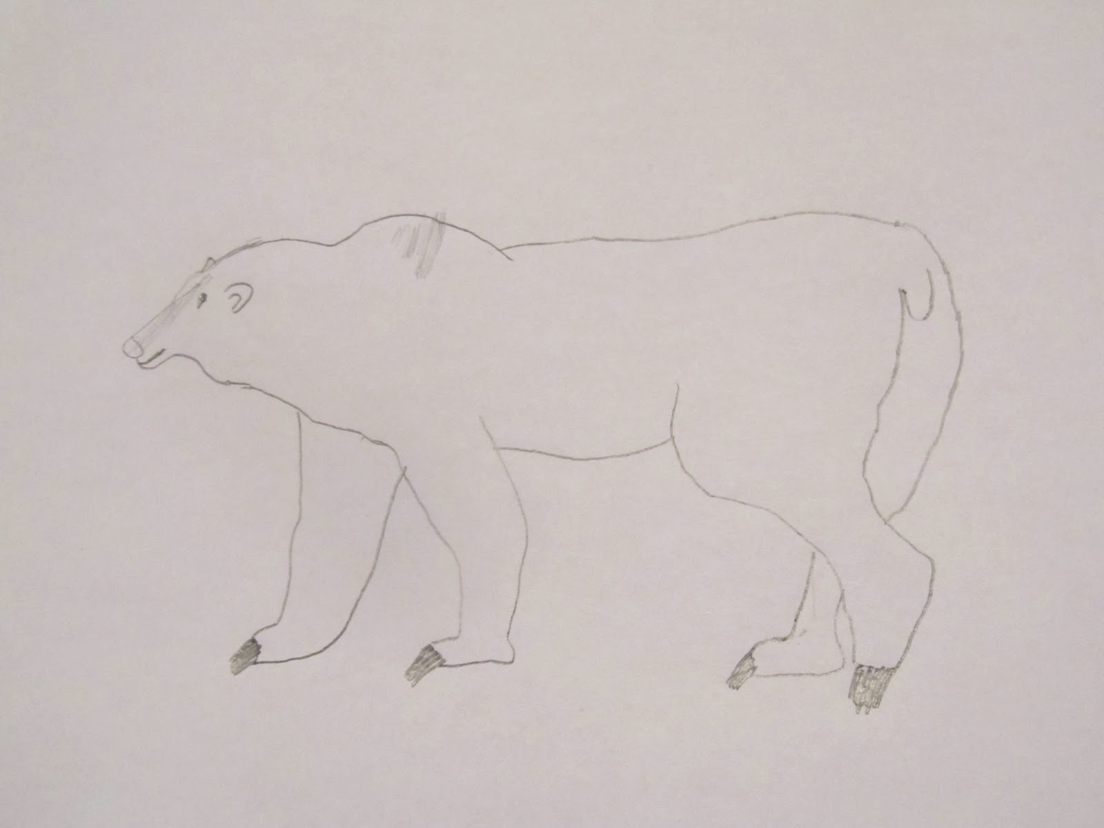 Polar Animals, Week 1