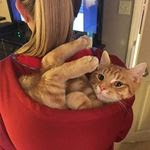 Gatos são folgados e se acomodam onde querem
