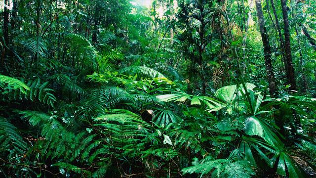 New analysis suggests that preserving rare species is vital to tropical forests