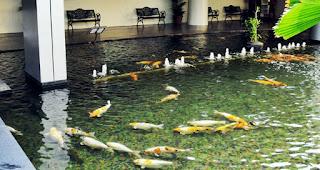 Prinsip Dasar Membuat Kolam Ikan Koi Sendiri