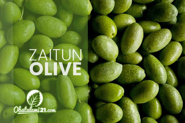Manfaat hydroxytyrosol dalam Zaitun